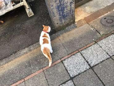 トルソーちゃんと猫ちゃん。♥