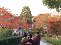 秋の京都へ・・・