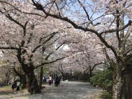 春のプレゼントキャンペーン\(^o^)/