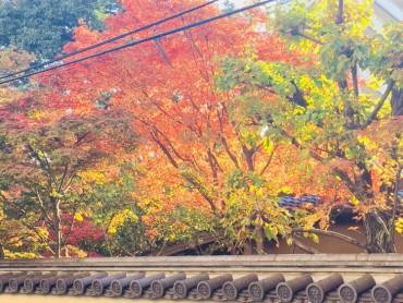 紅葉で撮影!!!!!◎
