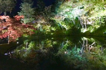京都の紅葉ライトアップ&ロケ撮影