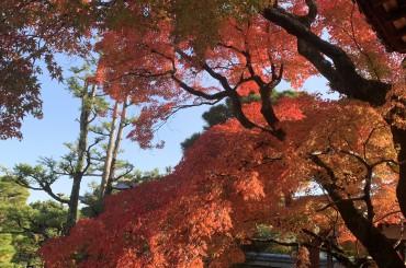 京都で紅葉!そして袴